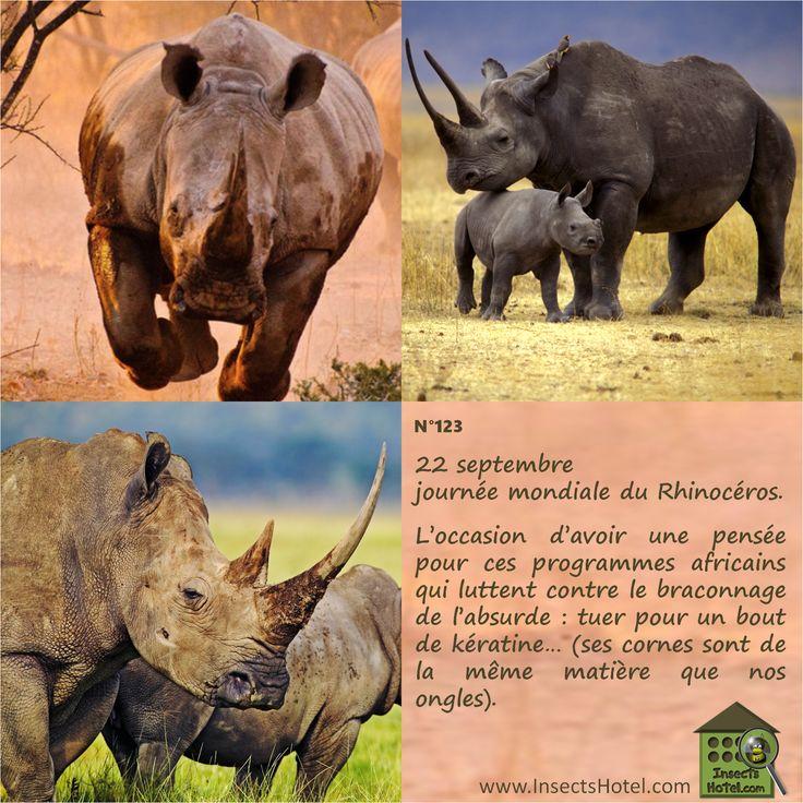 N°123 Le rhinocéros HORS-SERIE