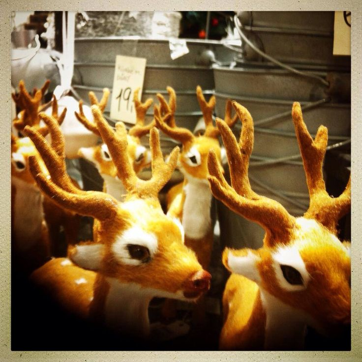 19. Dec 2013: When you are suddenly surrounded by a herd of reindeers... you just know Christmas is near. Det er ikke 'Hvor er Holger?' Men, 'Hvor er Rudolf?'
