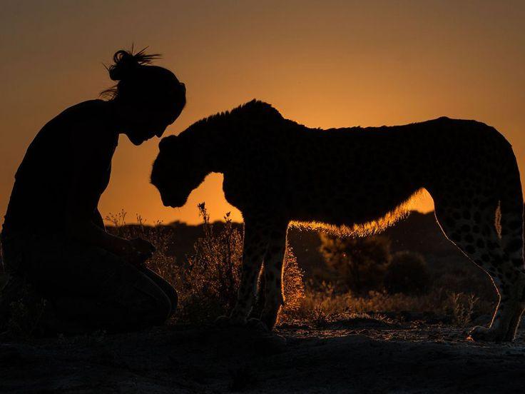 National Geographic  Passeggiata al tramonto Fotografia di Terry Allen, National Geographic Your Shot Un ghepardo e la sua salvatrice in Namibia.