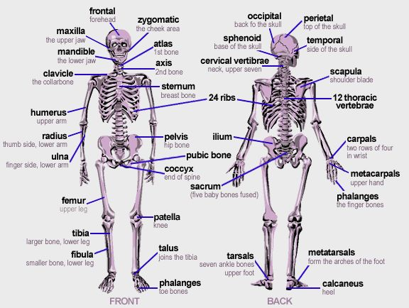 234 best body images on Pinterest  Medicine The human body and