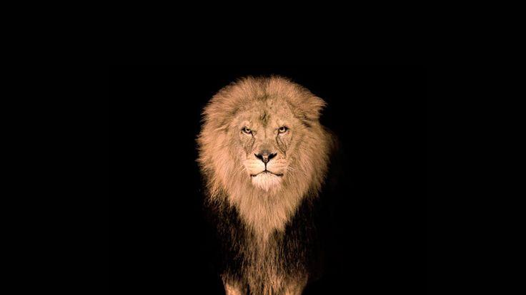 """La mamma e il leone  Una donna decide di adottare e prendersi cura di un bambino, rimasto solo dopo la morte della sua mamma. La donna, commossa dalla pena del bambino, promette a se stessa: """"Sarò io una buona mamma per lui, così il suo dolore avrà fine""""..."""