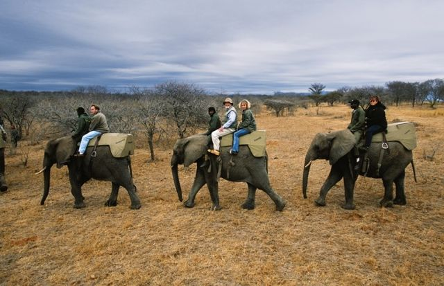 Explore the Panoramic Route: Optional activities available in the area are Elephant Encounters, helicopter and balloon flights or perhaps visit the gold mining town of Pilgrim's Rest. Book this family holiday with African Welcome   http://www.africanwelcome.com/tours-and-safaris-south-africa-botswana-namibia-vicfalls/safari-packages-kruger-national-park-south-africa/kruger-family-safari-6-days