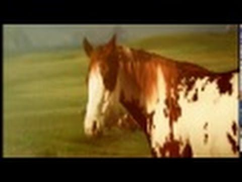 HORSES RUNNING SOUND EFFECTS *NEW*