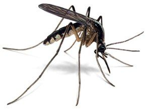 NATURAL ORGANIC MOSQUITO CONTROL PROGRAM  (A Cost Effective Pest Control Program that Works)