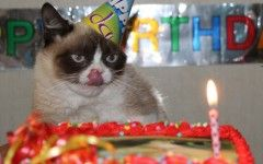 Angry Cat Meme Birthday About