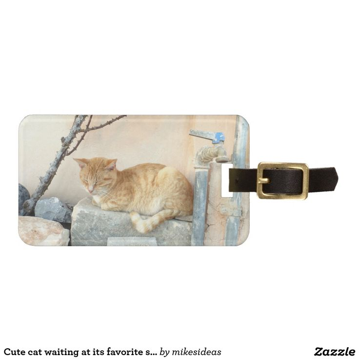Cute cat waiting at its favorite spot luggage tags
