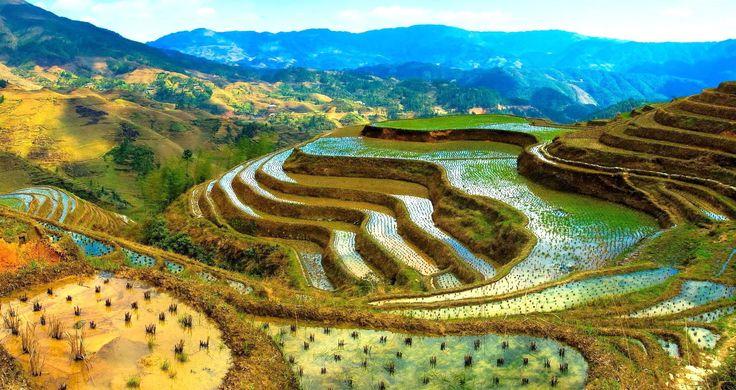 Terrazas de Arroz de Banaue (Filipinas).  Estos arrozales en terrazas tienen cerca de 2000 años de antigüedad. Se cree que fueron construidos por los pueblos locales. Estas terrazas se encuentran a 1500 metros sobre el nivel del mar y ocupan una superficie de más de 10 mil kilómetros cuadrados. Fue declarado Patrimonio de la Humanidad en 1995 y en peligro en 2001.