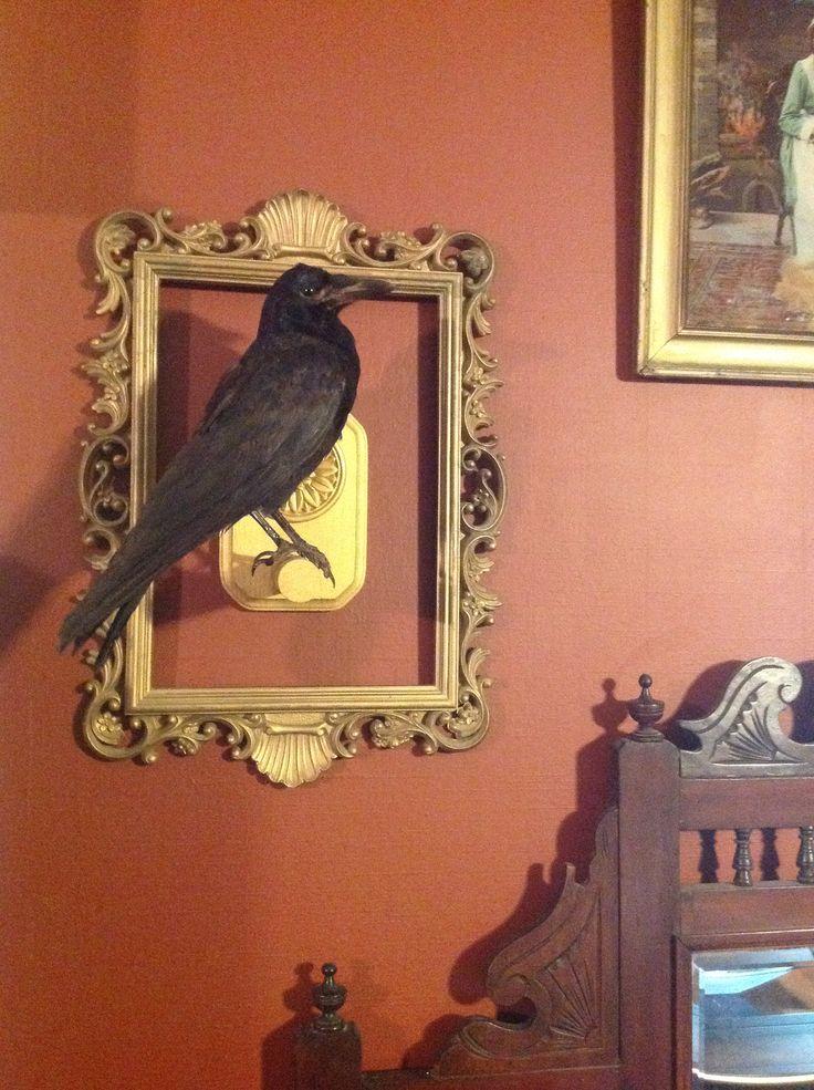 Taxidermy crow vintage decor