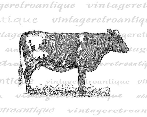 Pin By Danielle Whorton On Will Cow Graphic Animal Illustration Cow Illustration