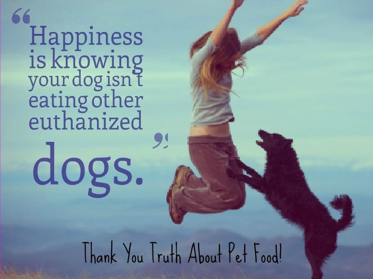 The Truth About Pet Food Research | Pawcurious: With Pet Lifestyle Expert and Veterinarian Dr. V.
