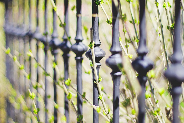 Spring Pushing at the Gate in The Beach, Toronto by Christopher Brian's Photography, via Flickr