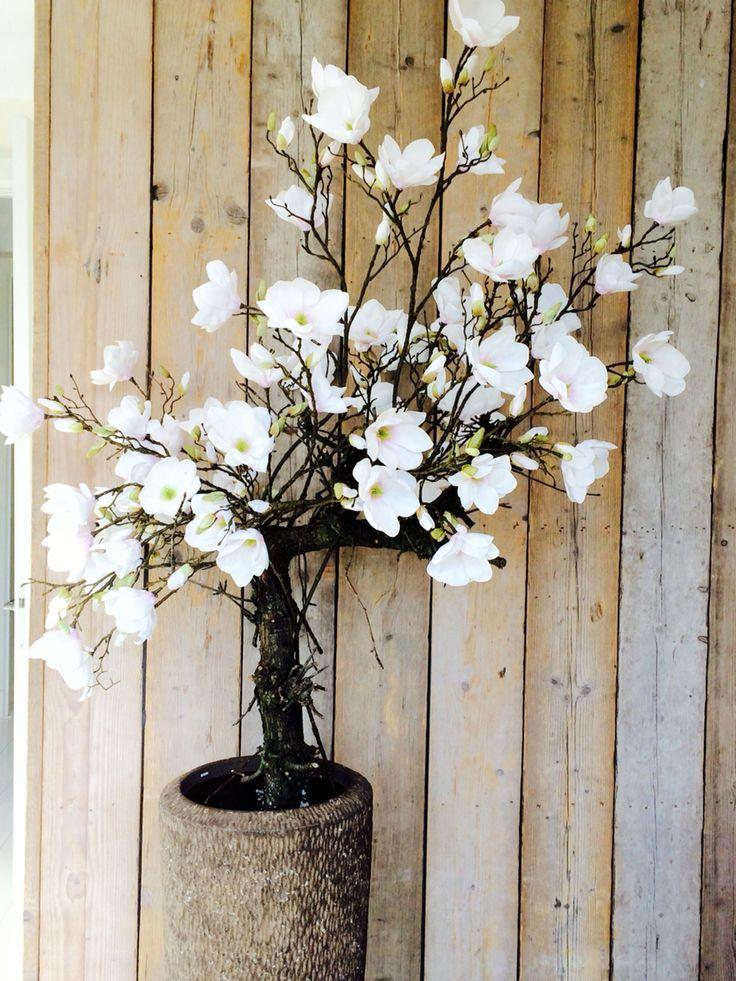 Magnolia boom! Voor info , ga naar www.annefleurs.nl