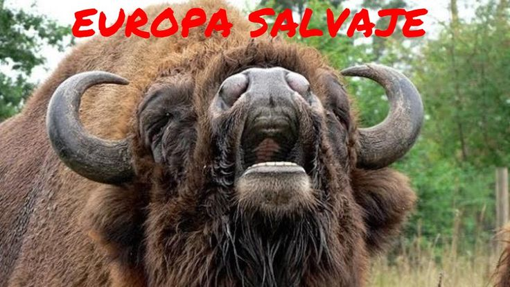 EUROPA SALVAJE 1 - ANIMALES SALVAJES,DOCUMENTALES DE ANIMALES,DOCU