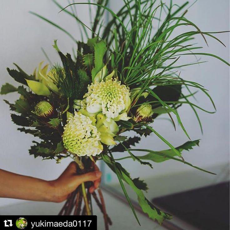 """・ ・ おはようございます♡箱を開けた瞬間新しい感動に包まれたお花は @yukimaeda0117 さんが丁寧にデコレーションしてくださった貴重なお花たちでした��♡新しい自分をスタートするお祝いのお花。 ・ @mf_hana ありがとう♡ ・ #素敵な友達の素敵な友達 #優しさは優しさを生み出す #出会い #感謝 #ありがとう❤️ #Repost @yukimaeda0117 (@get_repost) ・・・ ワラタという、オーストラリアの、 この時期に出回る赤い花があって、 アボリジニの言葉で""""赤い花""""という 意味がつけられているそうです。  なぜだか珍しい白いワラタを見つけて、 思わず手に取ってしまいました。 新しいもの、見たことないものに 触れることで、新しい自分も 見つけられるような気がします。  #flowerslovers #flowerstagram  #waratah #ワラタ #花のある暮らし #緑のある暮らし  #ネイティヴフラワー #オーストラリア #バーガーブッシュ #お祝いのお花…"""
