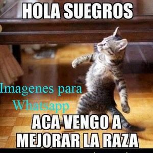 Imagen Relacionada Memes De Amor Chistosos Memes Chistosisimos Meme Gato