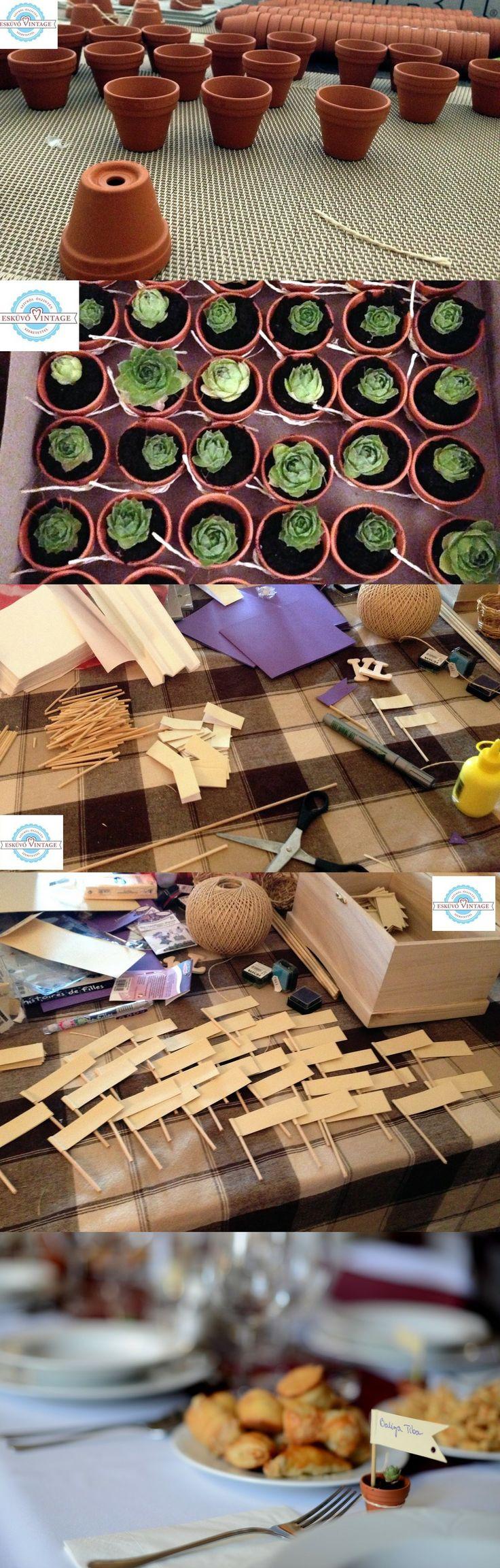 Kövirózsa mini agyagcserépben - Esküvői ajándék SK Succulent wedding favor - DIY