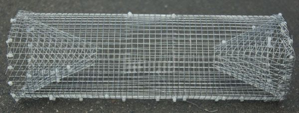Frog crayfish and fish trap made from scavenged wire mesh