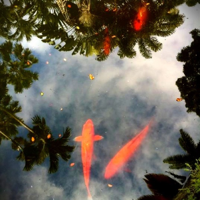 8 best one day images on pinterest backyard ponds for Koi fish pond kelowna