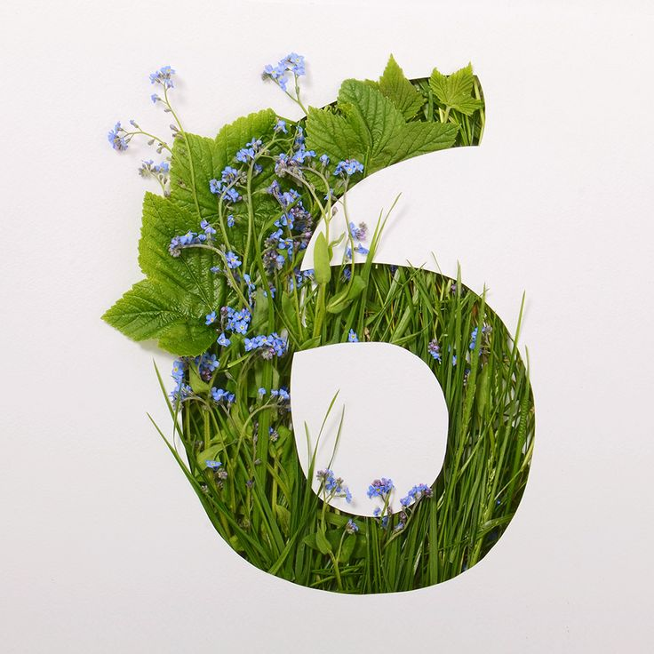 Green grass and number 6. #grass #green #6 #typography