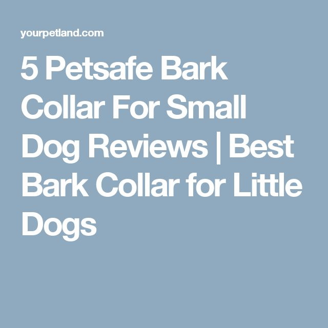 5 Petsafe Bark Collar For Small Dog Reviews | Best Bark Collar for Little Dogs