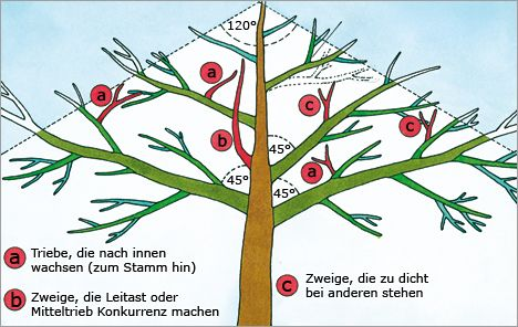 Obstbaumschnitt Illustration