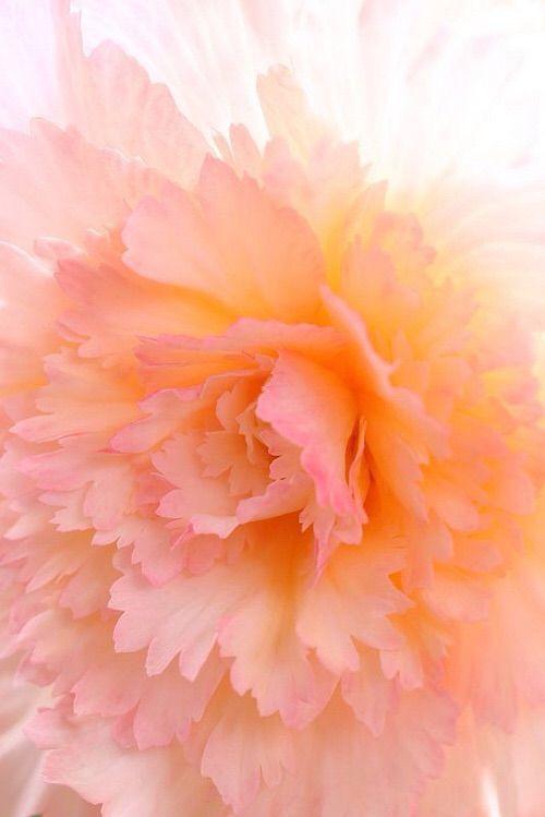 Image via We Heart It https://weheartit.com/entry/160237838/via/30396000 #art #classic #flowers #illustration #light #nature #pastel #peach #photography #pink #pretty #romantic #timeless #vintage