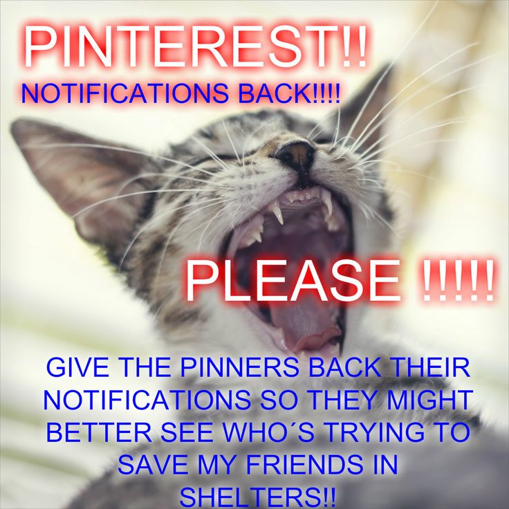 11/15/16 PINTEREST!!! PLEASE GIVE US OUR NOTIFICATIONS BACK!!