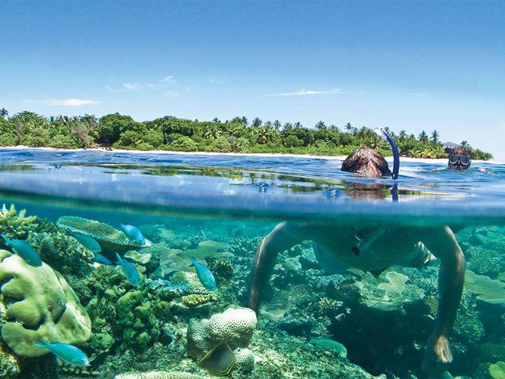 Snorkelling off beautiful Vomo Island Resort, Fiji  www.islandescapes.com.au
