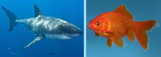 What Is A Shark - http://www.sharksider.com/what-is-a-shark/