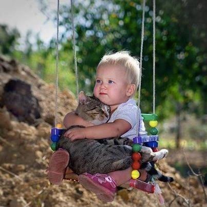Pati Sepeti Big Pure Love ,  kedi maması, köpek maması, kedi köpek ürünleri, kuş  ve balık ürünleri , kemirgen ve sürüngen malzeme ve yemleri, mamaları patisepeti.com da