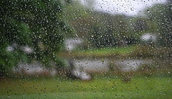 CONFIRMADO: EL OLOR A LLUVIA ESTÁ CARGADO DE BACTERIAS Pero no te preocupes, respirar el inocente olor a lluvia no tiene ningún riesgo.