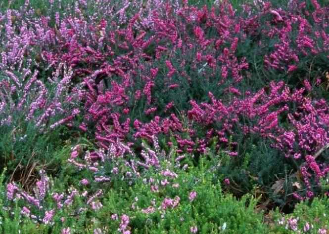 Les fleurs d'hiver - Les plantes bulbeuses