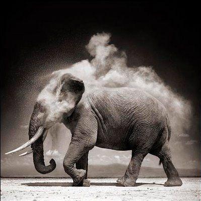 Elephant  Power of a vegetarian