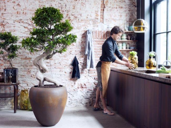 Best 25+ Indoor trees ideas on Pinterest