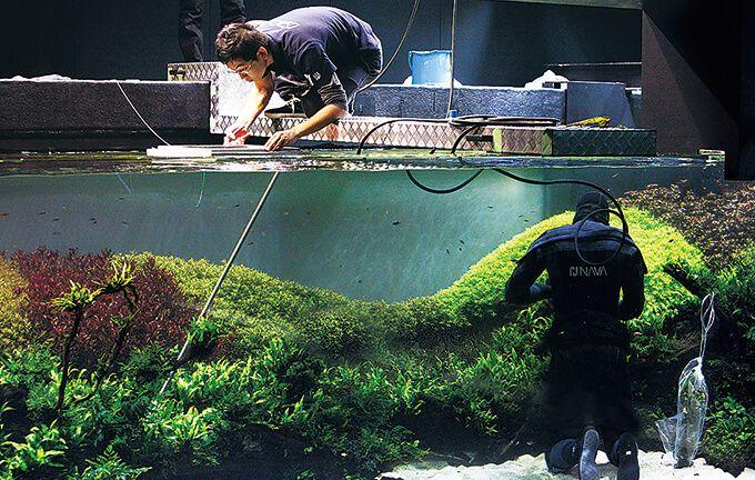 aquariums outreach team worked - 680×432