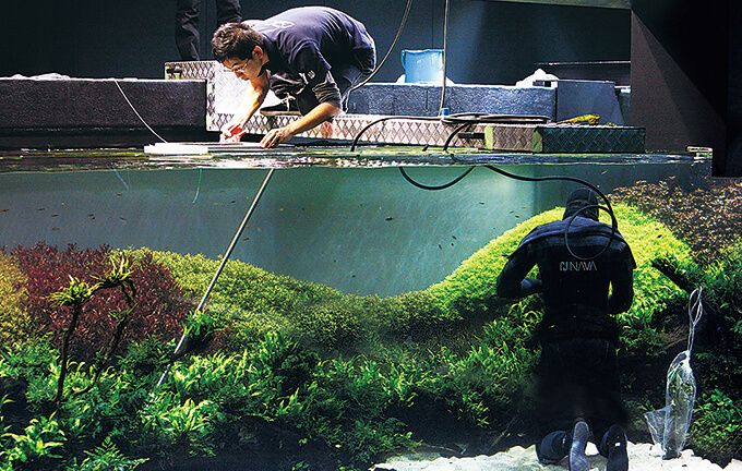 The world s largest nature aquarium project takashi amano for Ada fish tank