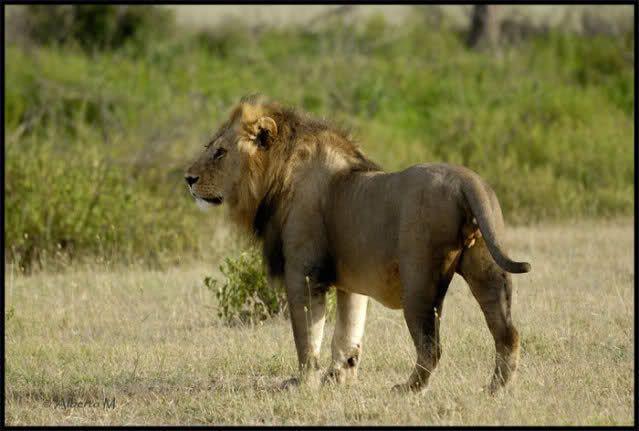 TANZANIA.REPORTAJE FOTOGRAFICO DOCUMENTADO (FEBRERO 2010) - FORUM AFRICA DEL ESTE - LosViajeros