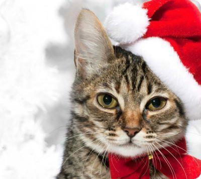 Hermosas imagenes de gatos para Navidad