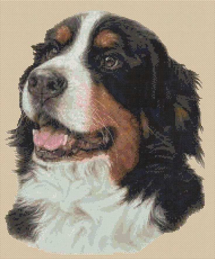 Counted Cross Stitch BERNESE MOUNTAIN DOG  -  COMPLETE KIT - No.14vb-279 KIT #FlowerPower37UK #Frame