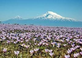 Image result for Ararat, Armenia Armenia