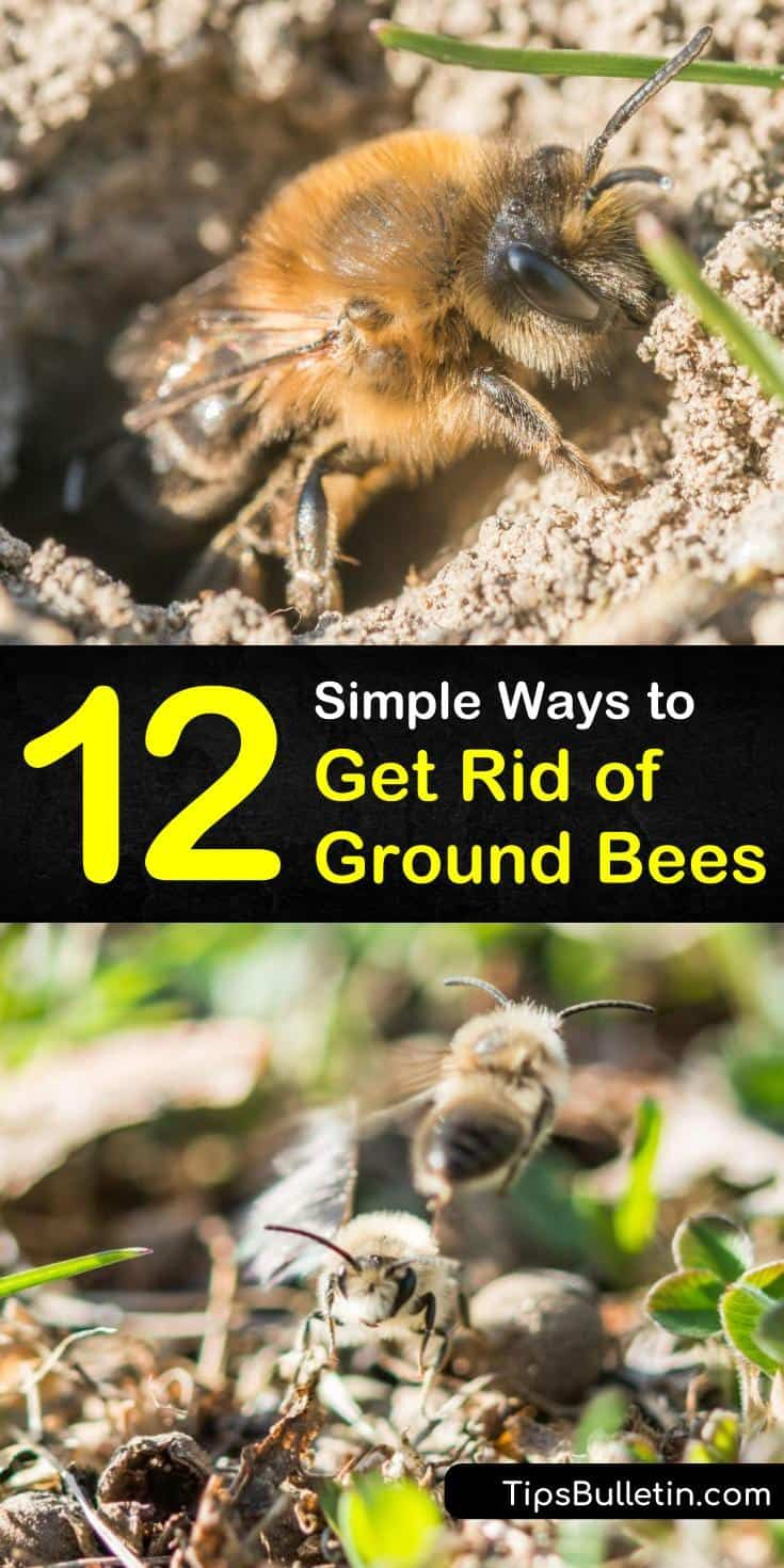 12 Simple Ways To Get Rid Of Ground Bees Ground Bees Bee Natural Bee Repellent