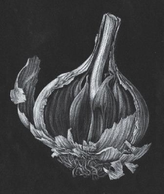 Line and Tonal Pencil Drawing for Botanical Observations with Julia Trickey