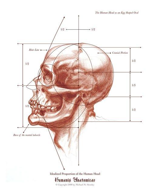 68 Best Anatomy Images On Pinterest