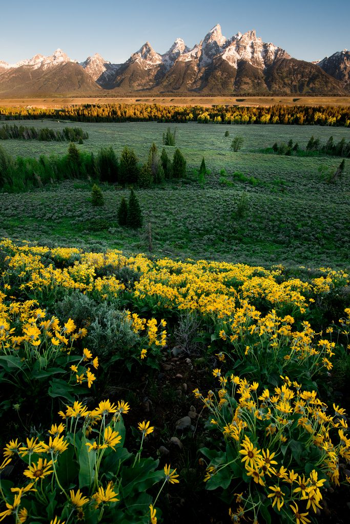 Grand Teton Spring by andertho In Grand Teton National Park, Wyoming, USA.