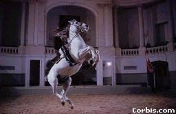 POINTERNET Horses, fajta ismertetők, arabians,lófajták, fajtakatalógus, fajtalexikon,lovaglás, ló, lovas, Pferde, reiter, riding, equestrian,