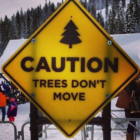 These r put up for all those stupid snowboarders who try to knock trees down with their faces.... haha stupid snowboarders