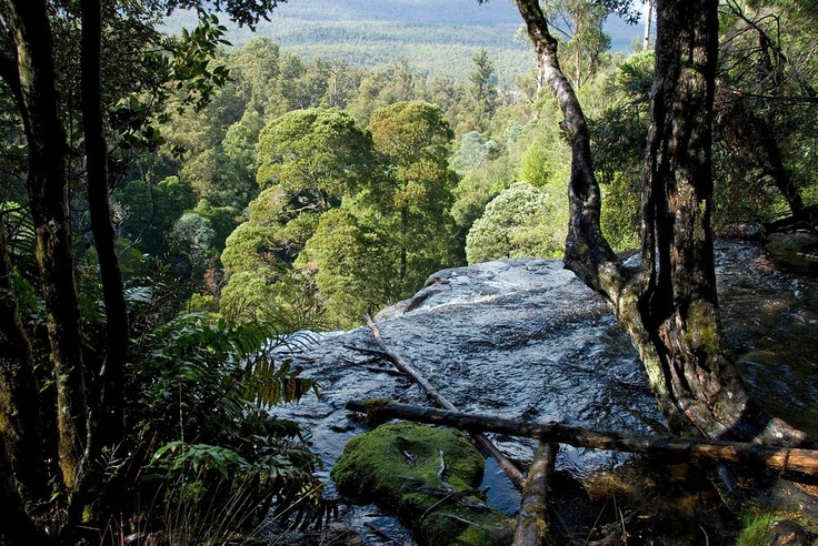 Top of Russell Falls in Mount Field National Park, Tasmania
