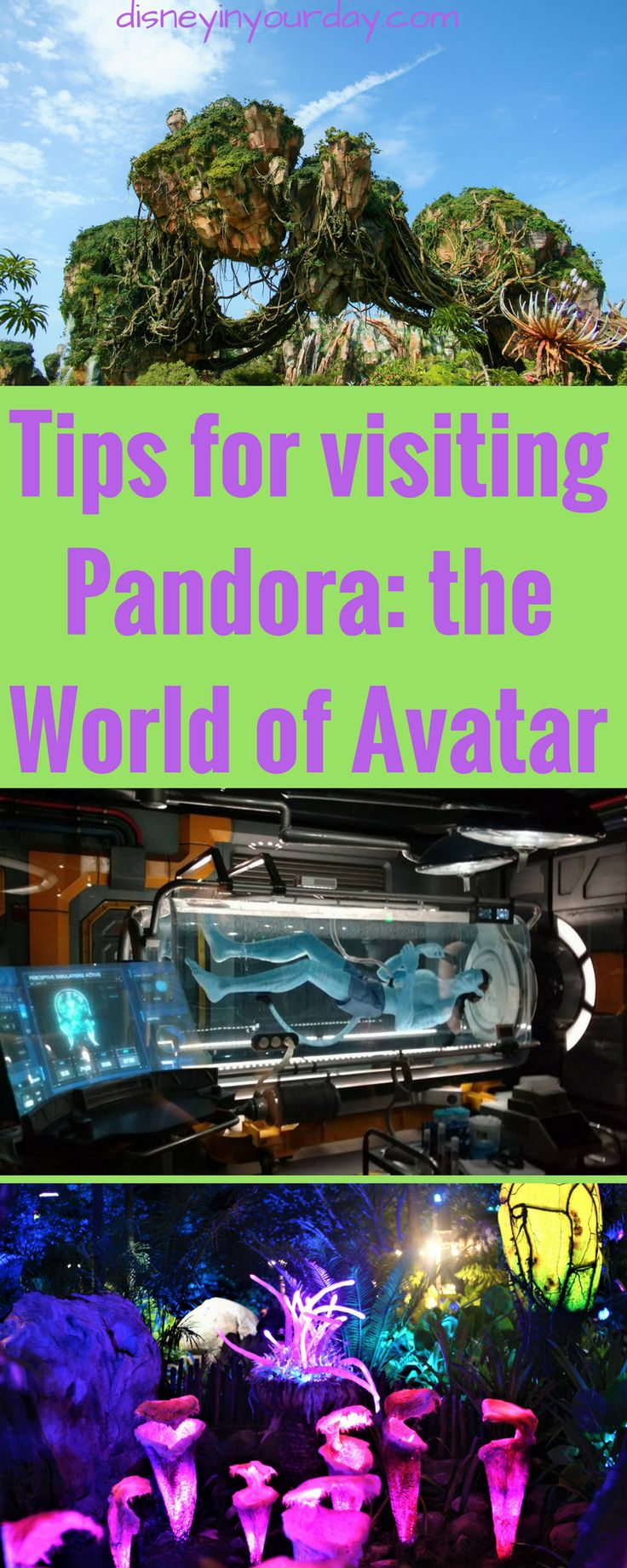 Tips for visiting Pandora: The World of Avatar - Disney in your Day