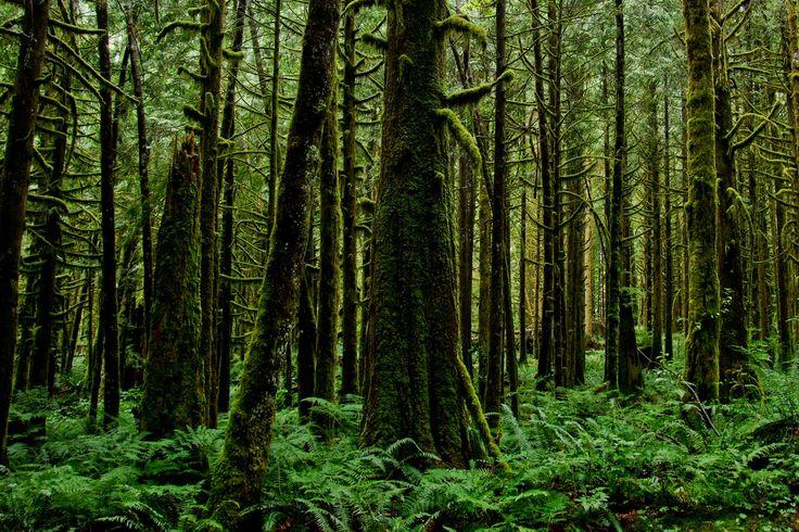 Sebutkan 5 Contoh Hasil Hutan? | Gambar Hutan yang Masih Hijau.