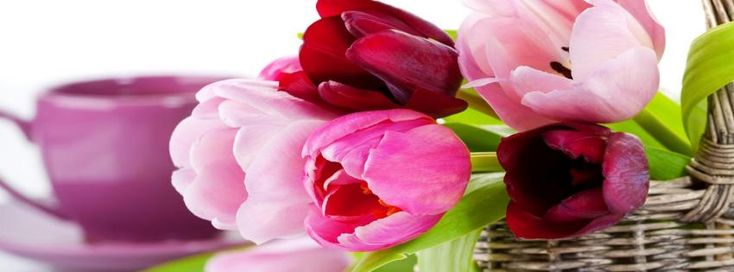 Beautiful Tulips Facebook cover - Facebook timeline covers maker